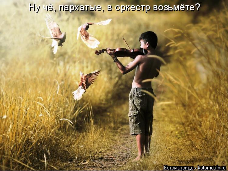 Котоматрица: Ну чё, пархатые, в оркестр возьмёте?