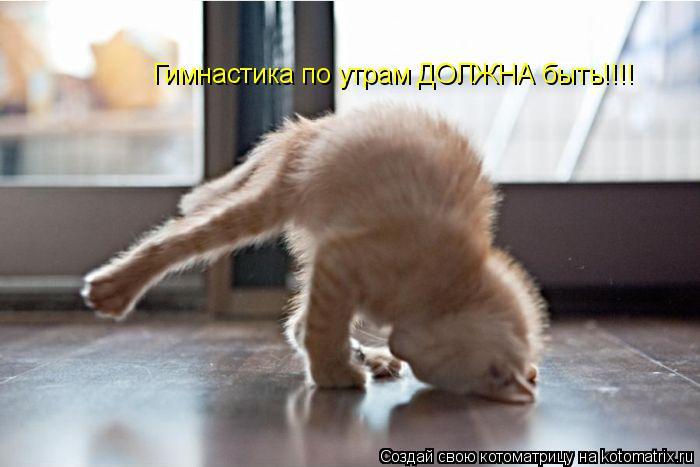 Котоматрица: Гимнастика по утрам ДОЛЖНА быть!!!!