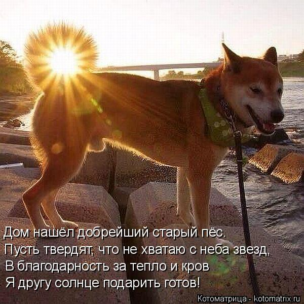 Котоматрица: Дом нашёл добрейший старый пёс. Пусть твердят, что не хватаю с неба звезд, В благодарность за тепло и кров Я другу солнце подарить готов!