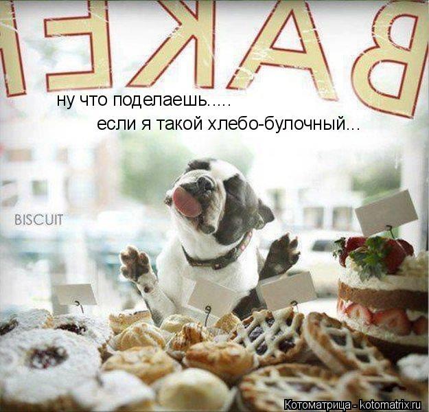 Котоматрица: ну что поделаешь..... если я такой хлебо-булочный...