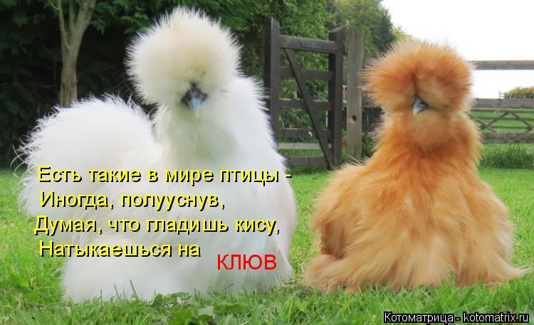 Котоматрица: Есть такие в мире птицы - Иногда, полууснув, Думая, что гладишь кису, Натыкаешься на КЛЮВ