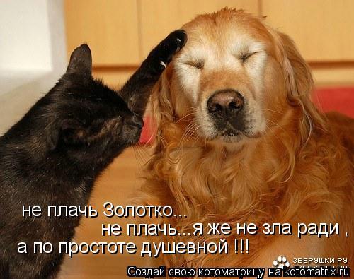Котоматрица: не плачь Золотко... не плачь..... я же не зла ради , а по простоте душевной !!!