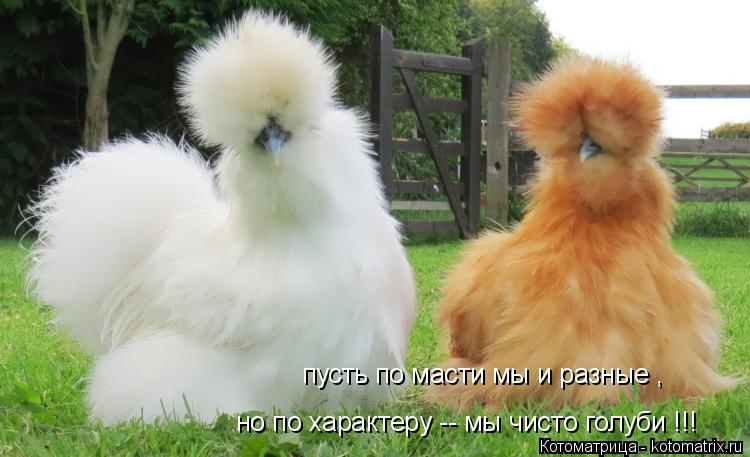 Котоматрица: пусть по масти мы и разные , но по характеру -- мы чисто голуби !!!