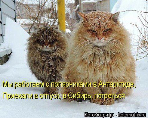 Котоматрица: Мы работаем с полярниками в Антарктиде, Приехали в отпуск Приехали в отпуск, в Сибирь, погреться