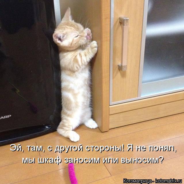 Котоматрица: Эй, там, с другой стороны! Я не понял,  мы шкаф заносим или выносим?