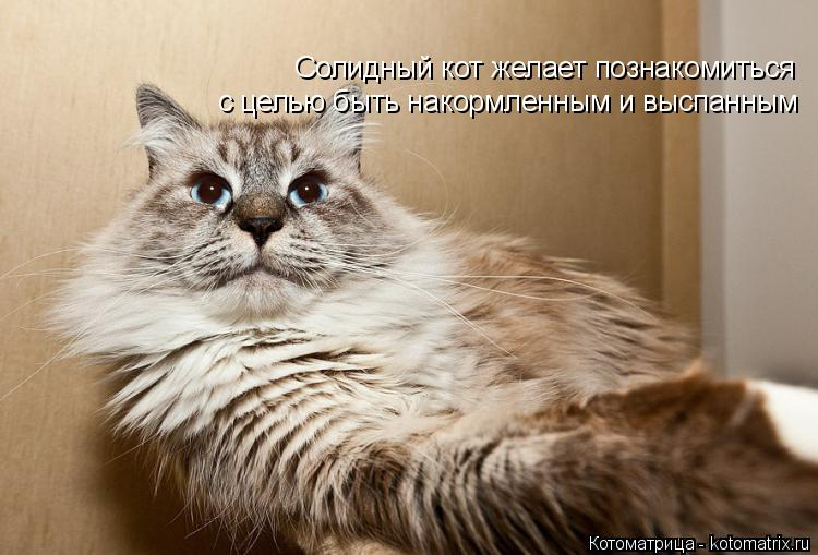 Котоматрица: Солидный кот желает познакомиться с целью быть накормленным и выспанным