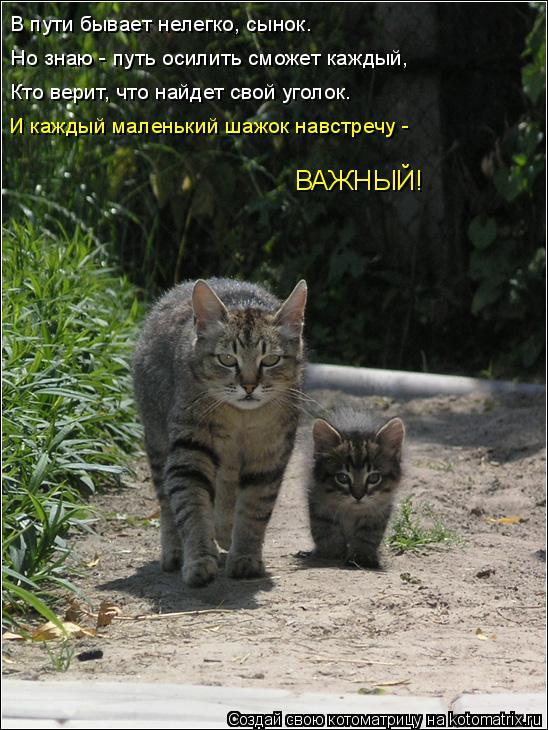 Котоматрица: В пути бывает нелегко, сынок. Но знаю - путь осилить сможет каждый, Кто верит, что найдет свой уголок. И каждый маленький шажок навстречу - ВАЖ