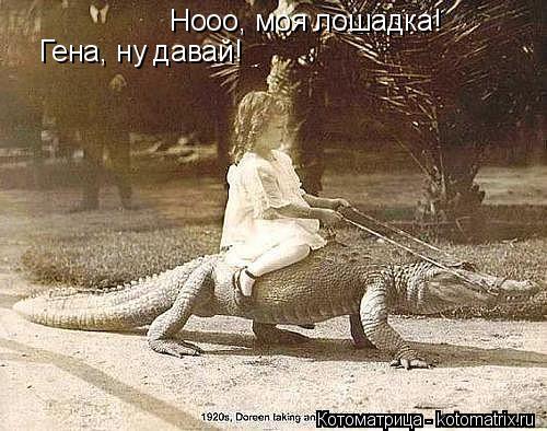 Котоматрица: Гена, ну давай! Нооо, моя лошадка!