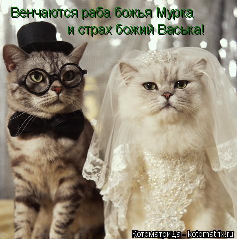 Котоматрица: Венчаются раба божья Мурка  и страх божий Васька!
