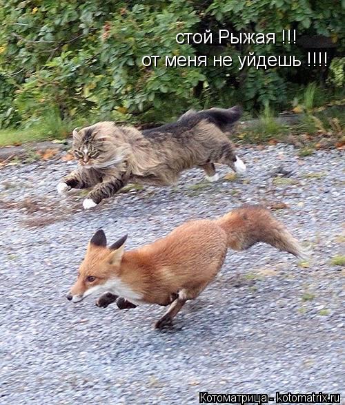 Котоматрица: стой Рыжая !!! от меня не уйдешь !!!!