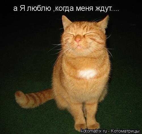Котоматрица: а Я люблю ,когда меня ждут....