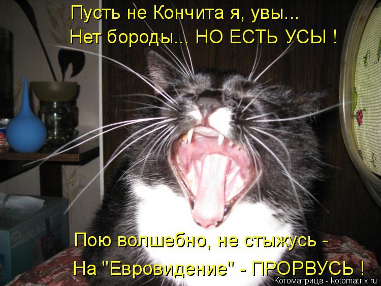 """Котоматрица: Пусть не Кончита я, увы... Нет бороды... НО ЕСТЬ УСЫ ! Пою волшебно, не стыжусь - На """"Евровидение"""" - ПРОРВУСЬ !"""