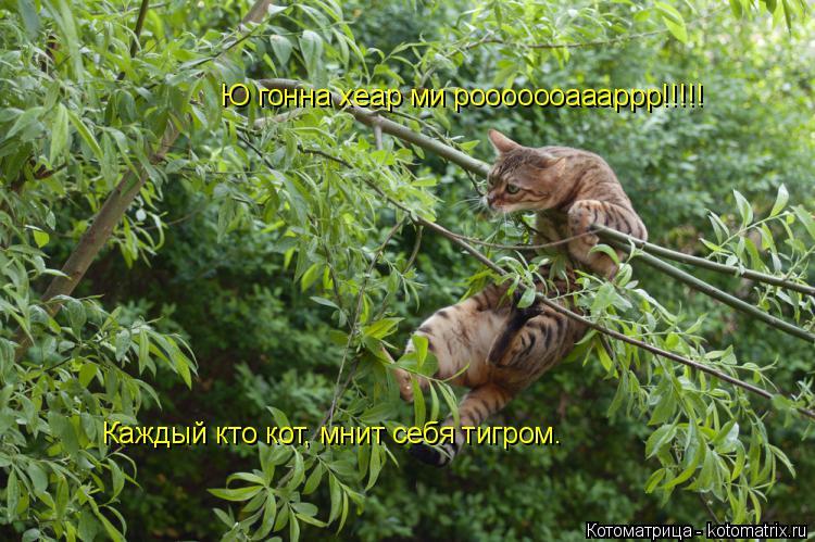 Котоматрица: Ю гонна хеар ми рооооооаааррр!!!!! Каждый кто кот, мнит себя тигром.
