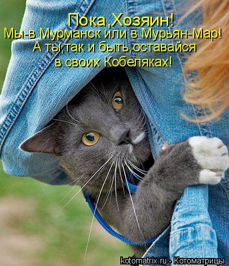 Котоматрица: Мы-в Мурманск или в Мурьян-Мар! А ты,так и быть,оставайся в своих Кобеляках! Пока,Хозяин!