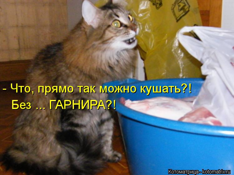 Котоматрица: - Что, прямо так можно кушать?! Без ... ГАРНИРА?!