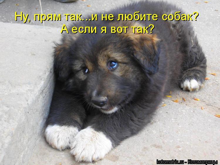 Котоматрица: Ну, прям так...и не любите собак? А если я вот так?