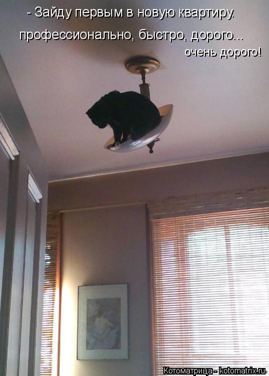 Котоматрица: - Зайду первым в новую квартиру. профессионально, быстро, дорого... очень дорого!