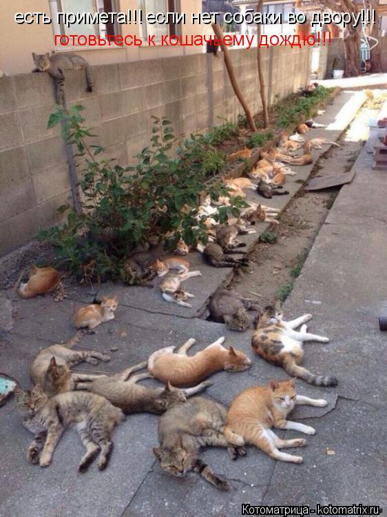 Котоматрица: есть примета!!! если нет собаки во двору!!! готовьтесь к кошачьему дождю!!!
