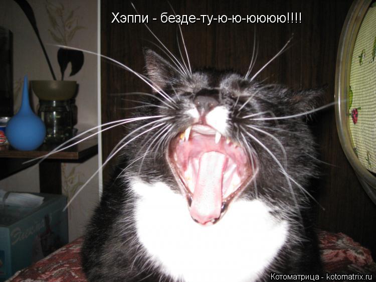 Котоматрица: Хэппи - безде-ту-ю-ю-юююю!!!!