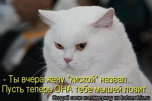 """Котоматрица: - Ты вчера жену """"киской"""" назвал... Пусть теперь ОНА тебе мышей ловит..."""