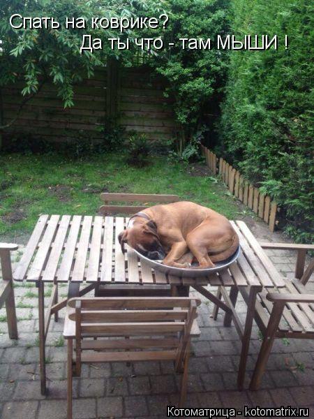 Котоматрица: Спать на коврике? Да ты что - там МЫШИ !