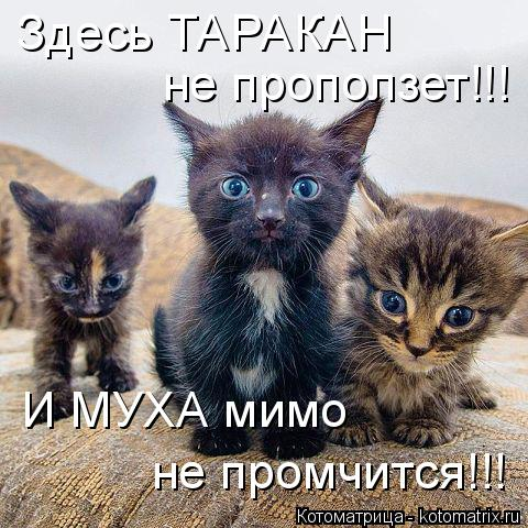 Котоматрица: Здесь ТАРАКАН не проползет!!! И МУХА мимо не промчится!!!