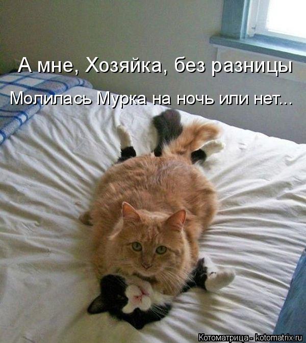 Котоматрица: А мне, Хозяйка, без разницы Молилась Мурка на ночь или нет...