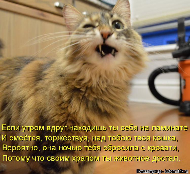 Котоматрица: Если утром вдруг находишь ты себя на ламинате И смеётся, торжествуя, над тобою твоя кошка, Вероятно, она ночью тебя сбросила с кровати, Потом