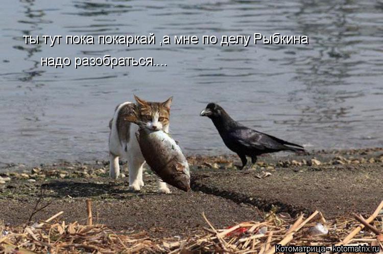 Котоматрица: ты тут пока покаркай ,а мне по делу Рыбкина  надо разобраться....