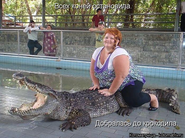 Котоматрица: Всех коней остановила.  Добралась до крокодила.
