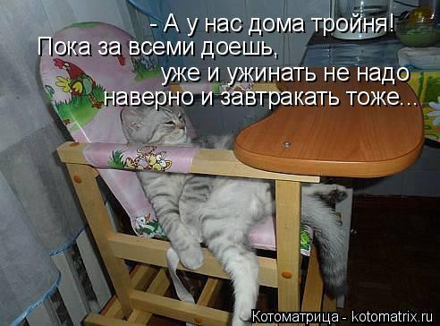 Котоматрица: - А у нас дома тройня! Пока за всеми доешь,  уже и ужинать не надо наверно и завтракать тоже...