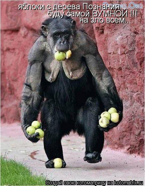 Котоматрица: яблоки с дерева Познания.... буду самой ВУМНОЙ !!! на зло всем....
