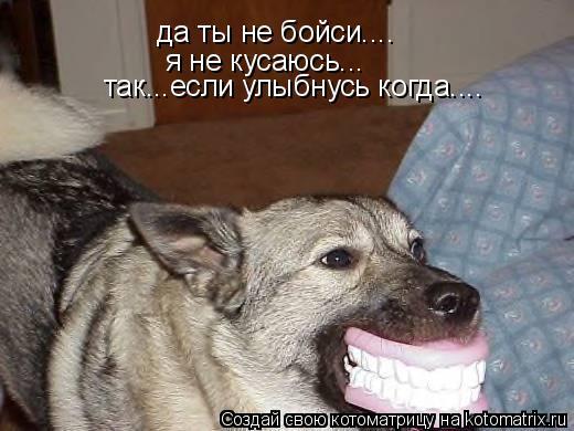 Котоматрица: да ты не бойси.... я не кусаюсь... так...если улыбнусь когда....