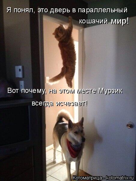 Котоматрица: Я понял, это дверь в параллельный  кошачий мир! Вот почему, на этом месте Мурзик всегда исчезает!