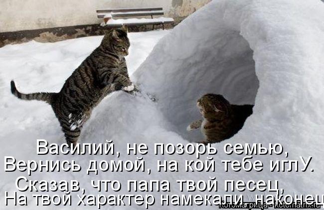 Котоматрица: Василий, не позорь семью, Вернись домой, на кой тебе иглУ. Сказав, что папа твой песец, На твой характер намекали, наконец