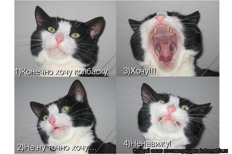 Как сделать чтобы коты тебя любили