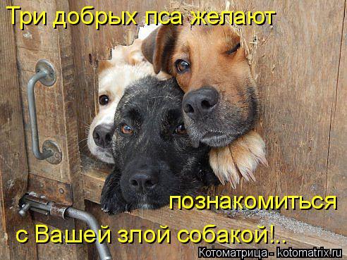 Котоматрица: Три добрых пса желают познакомиться с Вашей злой собакой!..