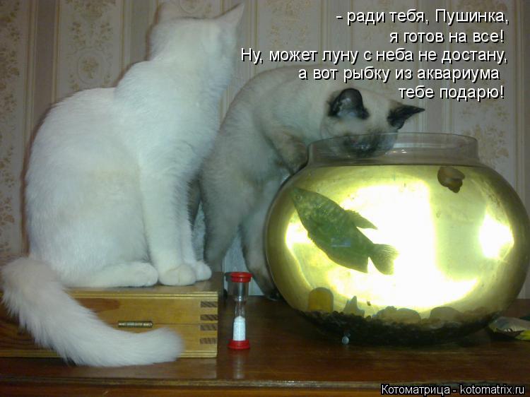 Котоматрица: - ради тебя, Пушинка,  я готов на все! Ну, может луну с неба не достану, а вот рыбку из аквариума тебе подарю!