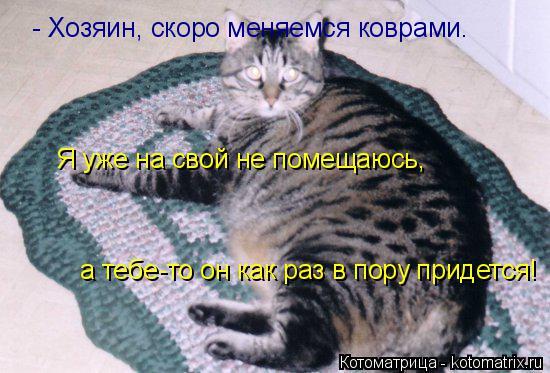 Котоматрица: - Хозяин, скоро меняемся коврами. Я уже на свой не помещаюсь, а тебе-то он как раз в пору придется!