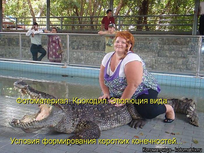 Котоматрица: Фотоматериал: Крокодил. Эволюция вида. Условия формирования коротких конечностей...