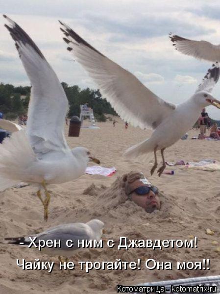 Котоматрица: - Хрен с ним с Джавдетом! Чайку не трогайте! Она моя!!
