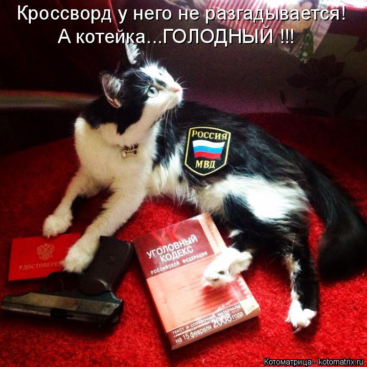 Котоматрица: Кроссворд у него не разгадывается! А котейка...ГОЛОДНЫЙ !!!