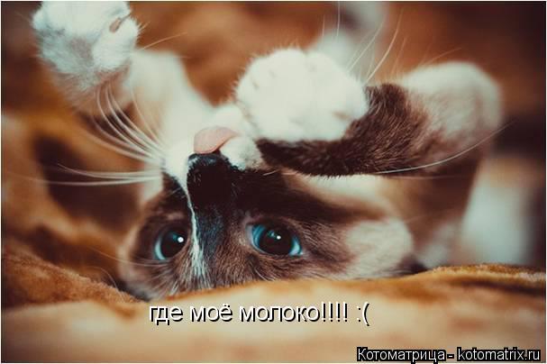 Котоматрица: где моё молоко!!!! :(