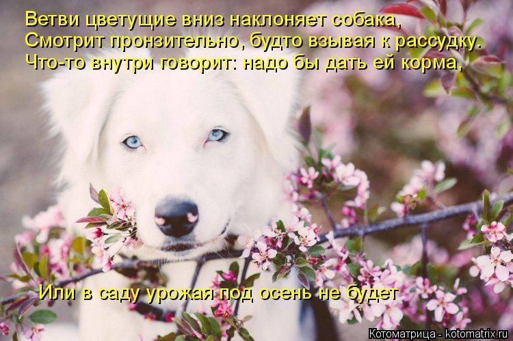Котоматрица: Ветви цветущие вниз наклоняет собака, Смотрит пронзительно, будто взывая к рассудку. Что-то внутри говорит: надо бы дать ей корма, Или в саду
