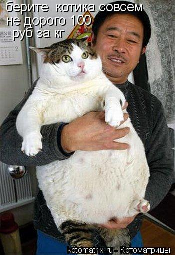 Котоматрица: берите  котика совсем  не дорого 100  руб за кг