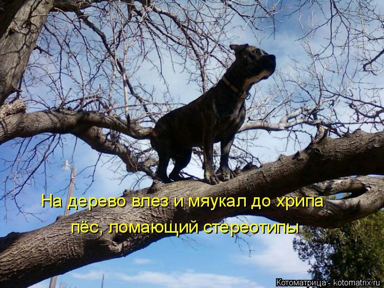 Котоматрица: На дерево влез и мяукал до хрипа пёс, ломающий стереотипы