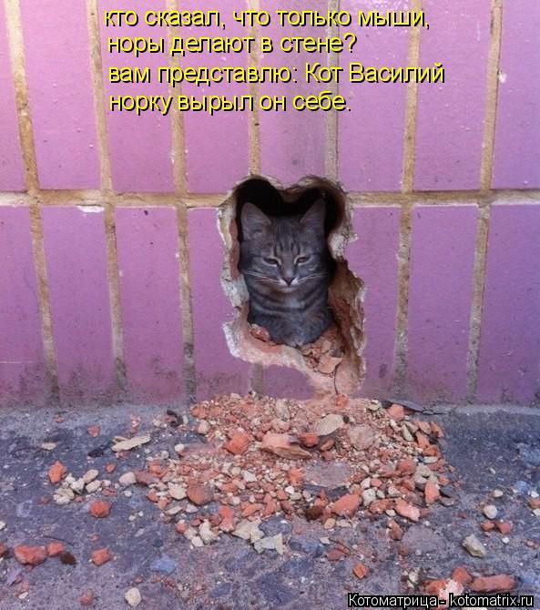 Котоматрица: кто сказал, что только мыши,  норы делают в стене? вам представлю: Кот Василий норку вырыл он себе.