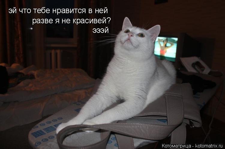 Котоматрица: эй что тебе нравится в ней разве я не красивей? эээй
