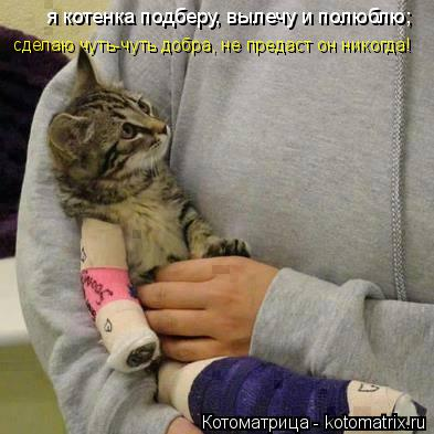 Котоматрица: я котенка подберу, вылечу и полюблю; сделаю чуть-чуть добра, не предаст он никогда!