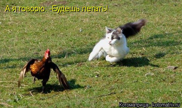 Котоматрица: А я говорю: -Будешь летать!
